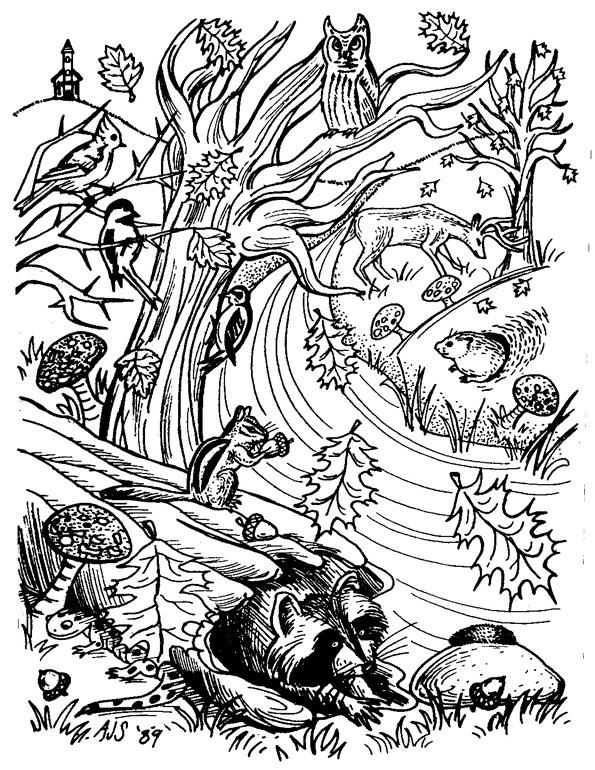 thorn-creek-woodland-animals