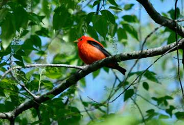 Birding for all at Thorn Creek Woods 2017