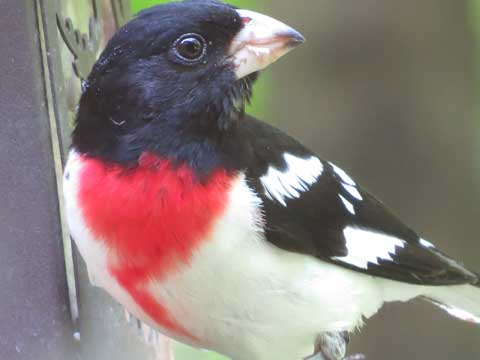 Learn Your Birds by Spring at Thorn Creek Woods Nature Center