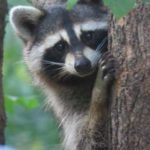 Animals in Autumn for Kids Program at Thorn Creek Woods Nature Center